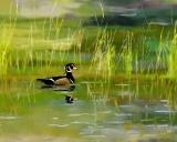 duck 1 72 .jpg