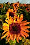 sun row 6x9