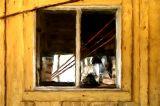 louie's shed window 12x8