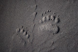 Wild Bear Photos