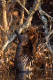 Wildlife Photos