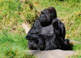 Ape Power