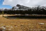 Dana Meadow,Yosemite