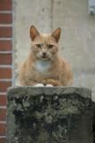 Bosch en Vaart: Cat