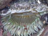 Muir beach CA living waters
