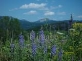 Grand Teton meadow WY
