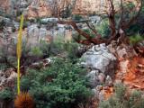 North rim trail flora AZ