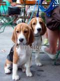 pups in vienna