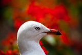 Gull with flower background
