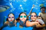 Kids swimming underwater with shark
