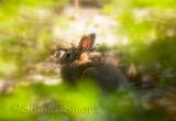 Bunny through shrubs