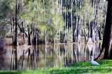 Narrabeen flood