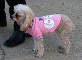 canine for Obama