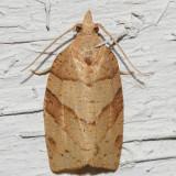 3593 - Woodgrain Leafroller - Pandemis lamprosana