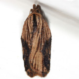 3536 -- Robinson's Acleris Moth -- Acleris robinsoniana