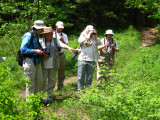 Butterfly walk at Delaney conservation area