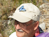 Sheep Skipper - Atrytonopsis edwardsi (on Ro Waurer's hat)