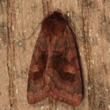 10524 - Bronzed Cutworm - Nephelodes minians
