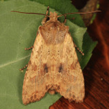 9888 - Nameless Pinion - Lithophane innominata