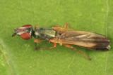 Eumetopiella rufipes