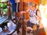 Julie feeding the White-nosed Coati's