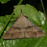 Noctuidae: Herminiinae through Hypeninae Moths  8322 - 8489