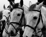 20051227 Three Horses