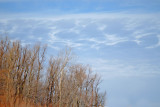 Willows  Sky 2168.jpg