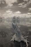 Loon Lake Stump 0077.jpg