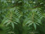 Walnut Leaf pair.jpg