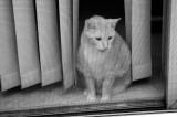 Kitty Moire 229.jpg