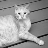 IR Cat 0496.jpg