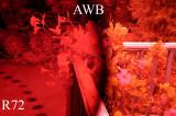 AWB Compare 00492.jpg