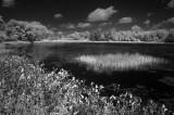 Loon Lake 0589.jpg