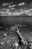 Loon Lake 0590.jpg
