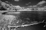 Loon Lake 00591.jpg