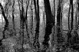 Floodplain Reflect 596.jpg