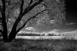 May Field 1505.jpg