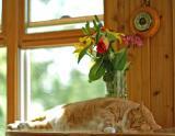 Sleeping Cat 5058.jpg