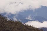 Bosque Unchog, Huanuco