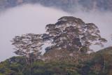 river edge forest near Pantiacolla Lodge, Manu