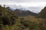 Bosque Unchog, Huanuco (3500m a.s.l.)