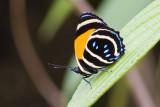 butterfly sp. ('88')