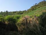 deforestation, Carpish Mountains