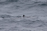 IMG_0704_basking shark.jpg