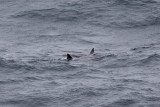 IMG_0710_basking shark.jpg