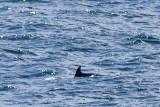 IMG_9896_bottlenose dolphin.jpg