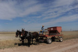 Feeding Cattle by Carriage and Mule Team