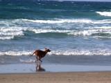 Surf Beach, Lompoc 11-20