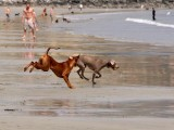 Chasing a small Weim..
